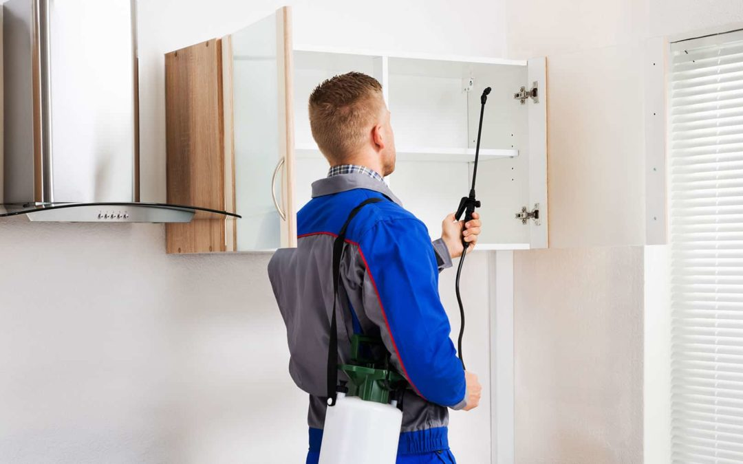 The Importance of Regular Pest Inspections